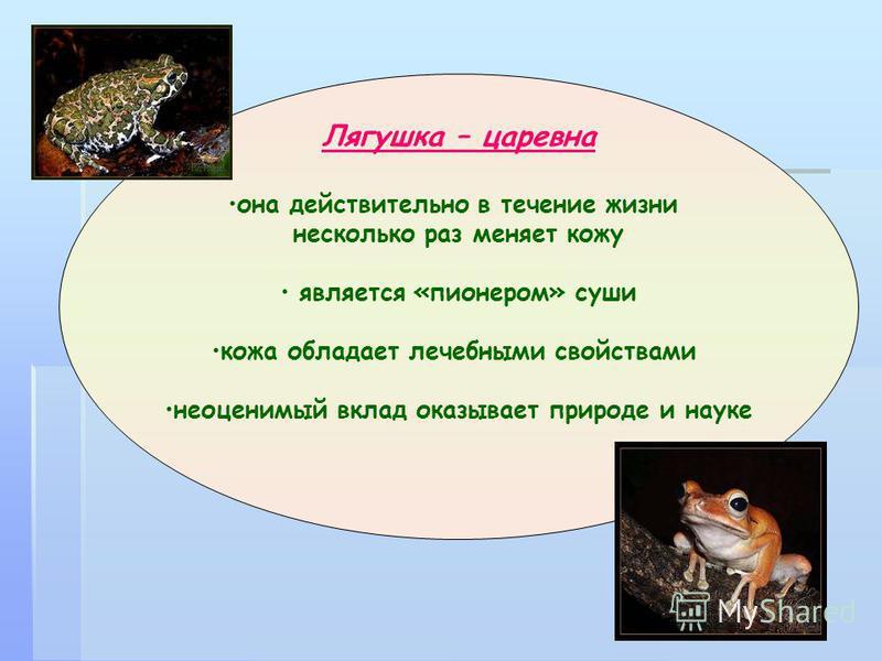 Лягушка – царевна она действительно в течение жизни несколько раз меняет кожу является «пионером» суши кожа обладает лечебными свойствами неоценимый вклад оказывает природе и науке
