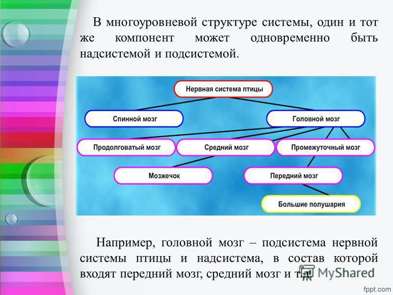 В многоуровневой структуре системы, один и тот же компонент может одновременно быть надсистемой и подсистемой. Например, головной мозг – подсистема нервной системы птицы и надсистема, в состав которой входят передний мозг, средний мозг и т.д.