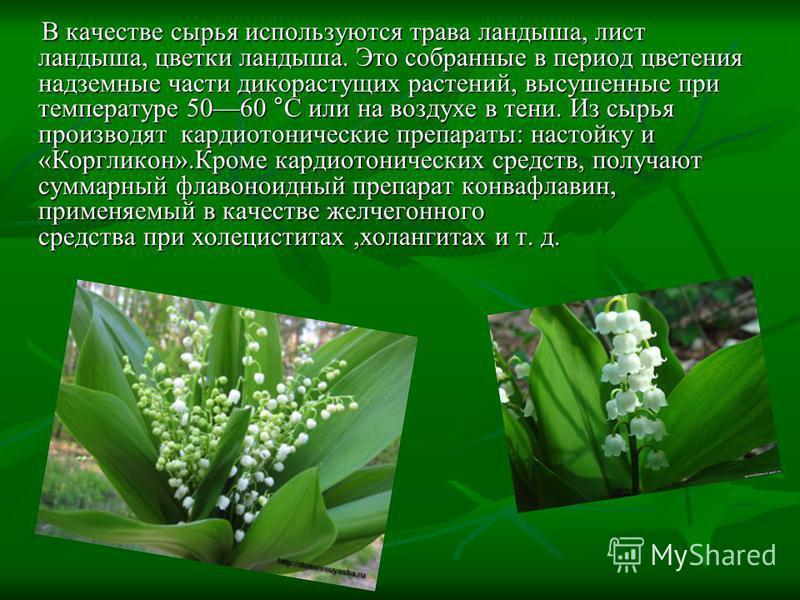 В качестве сырья используются трава ландыша, лист ландыша, цветки ландыша. Это собранные в период цветения надземные части дикорастущих растений, высушенные при температуре 5060 °C или на воздухе в тени. Из сырья производят кардиотонические препараты