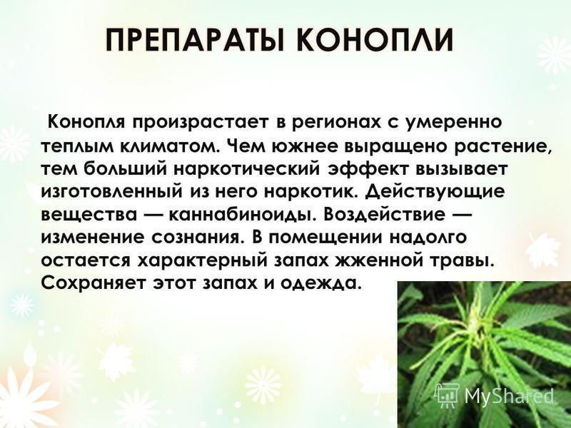 Конопля произрастает в регионах с умеренно теплым климатом. Чем южнее выращено растение, тем больший наркотический эффект вызывает изготовленный из него наркотик. Действующие вещества каннабиноиды. Воздействие изменение сознания. В помещении надолго