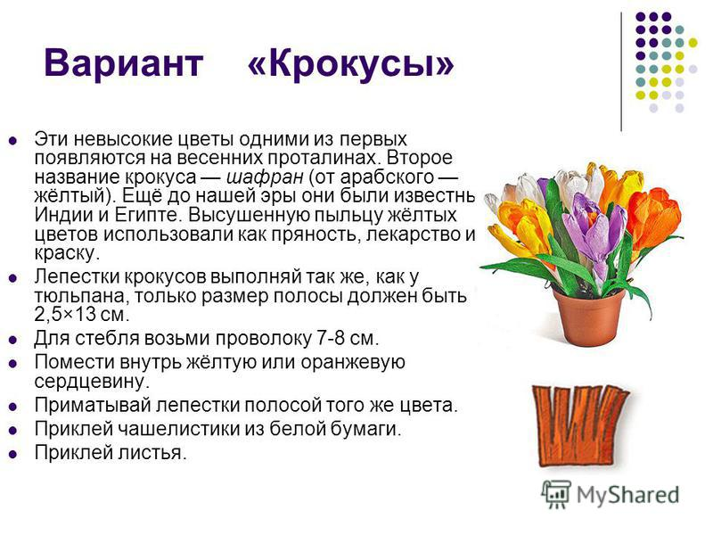 Вариант «Крокусы» Эти невысокие цветы одними из первых появляются на весенних проталинах. Второе название крокуса шафран (от арабского жёлтый). Ещё до нашей эры они были известны в Индии и Египте. Высушенную пыльцу жёлтых цветов использовали как прян