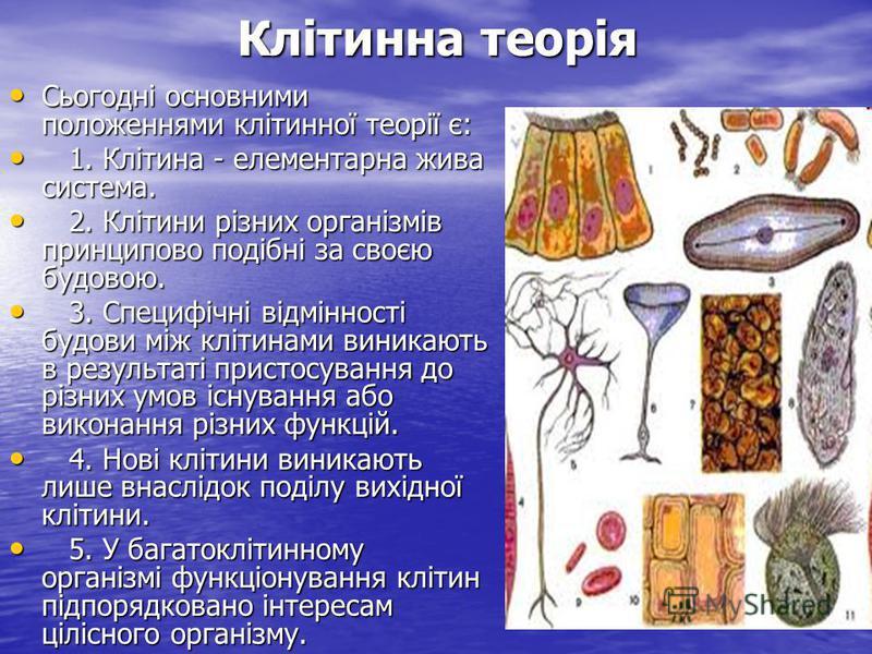 Сьогодні основними положеннями клітинної теорії є: Сьогодні основними положеннями клітинної теорії є: 1. Клітина - елементарна жива система. 1. Клітина - елементарна жива система. 2. Клітини різних організмів принципово подібні за своєю будовою. 2. К