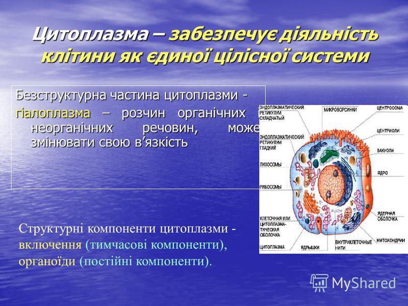 Цитоплазма – забезпечує діяльність клітини як єдиної цілісної системи Безструктурна частина цитоплазми - гіалоплазма – розчин органічних і неорганічних речовин, може змінювати свою вязкість Структурні компоненти цитоплазми - включення (тимчасові комп