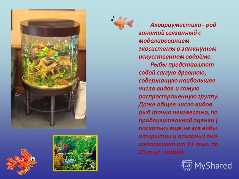 Аквариумистика - род занятий связанный с моделированием экосистемы в замкнутом искусственном водоёме. Рыбы представляют собой самую древнюю, содержащую наибольшее число видов и самую распространенную группу. Даже общее число видов рыб точно неизвестн
