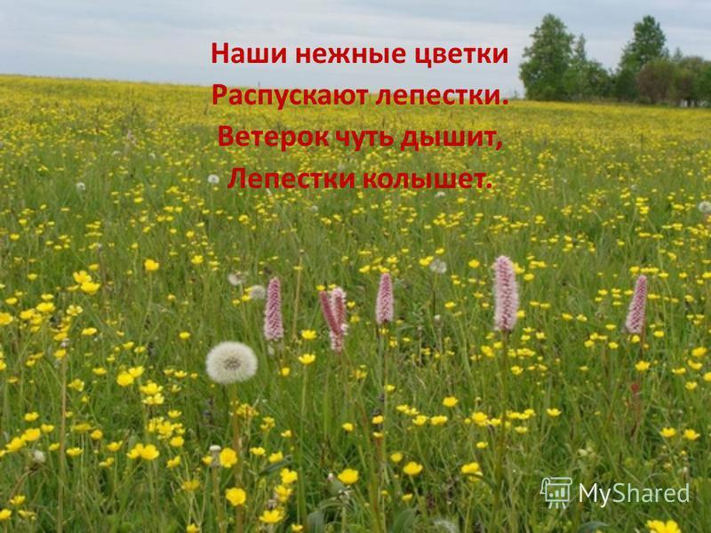 Наши нежные цветки Распускают лепестки. Ветерок чуть дышит, Лепестки колышет.
