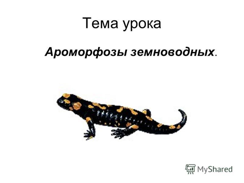 Тема урока Ароморфозы земноводных.