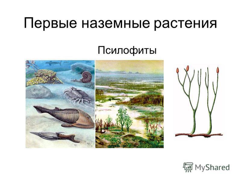 Первые наземные растения Псилофиты