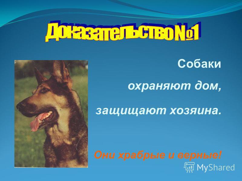 Собаки охраняют дом, защищают хозяина. Они храбрые и верные!