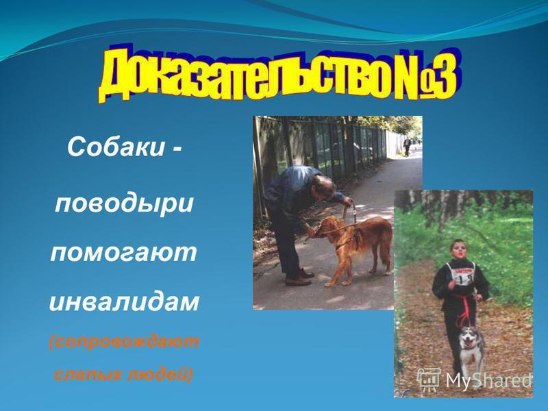 Собаки - поводыри помогают инвалидам (сопровождают слепых людей)
