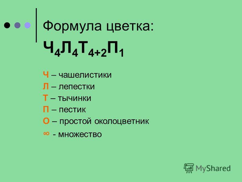 Формула цветка: Ч 4 Л 4 Т 4+2 П 1 Ч – чашелистики Л – лепестки Т – тычинки П – пестик О – простой околоцветник - множество