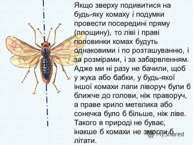 Якщо зверху подивитися на будь-яку комаху і подумки провести посередині пряму (площину), то ліві і праві половинки комах будуть однаковими і по розташуванню, і за розмірами, і за забарвленням. Адже ми ні разу не бачили, щоб у жука або бабки, у будь-я