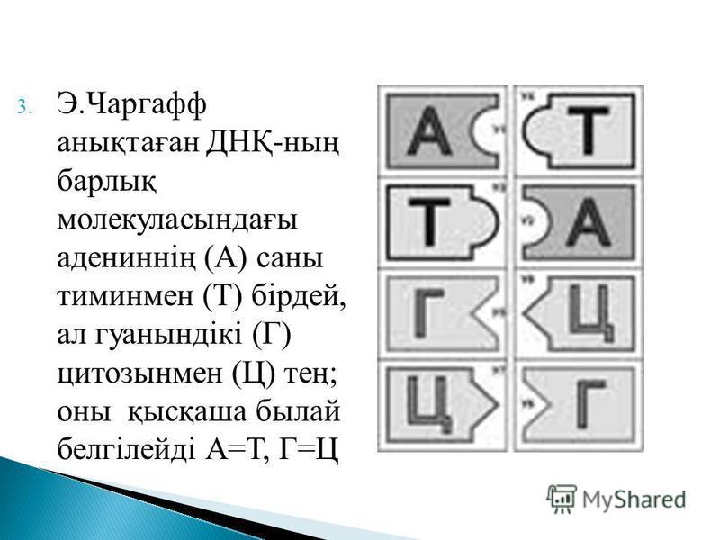 3. Э.Чаргафф анықтаған ДНҚ-ның барлық молекуласындағы адениннің (А) саны тиминмен (Т) бірдей, ал гуанындікі (Г) цитозынмен (Ц) тең; оны қысқаша былай белгілейді А=Т, Г=Ц