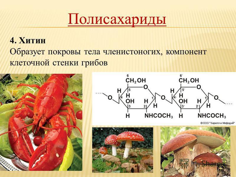 Полисахариды 4. Хитин Образует покровы тела членистоногих, компонент клеточной стенки грибов