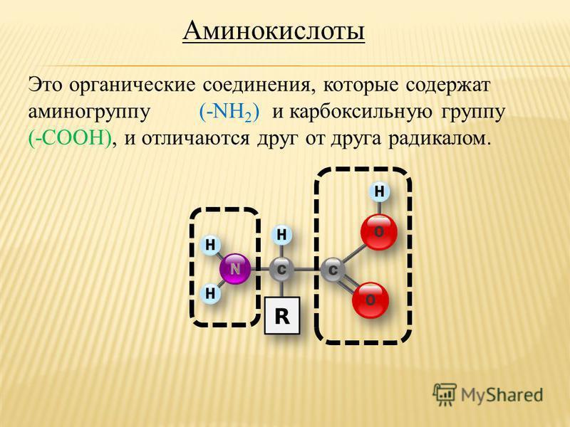 Аминокислоты Это органические соединения, которые содержат аминогруппу (-NH 2 ) и карбоксильную группу (-COOH), и отличаются друг от друга радикалом.