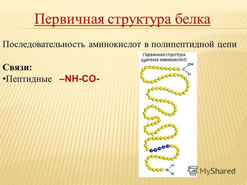 Первичная структура белка Последовательность аминокислот в полипептидной цепи Связи: Пептидные –NH-CO-