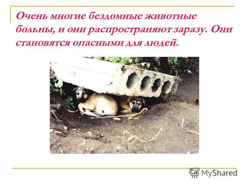 Очень многие бездомные животные больны, и они распространяют заразу. Они становятся опасными для людей.