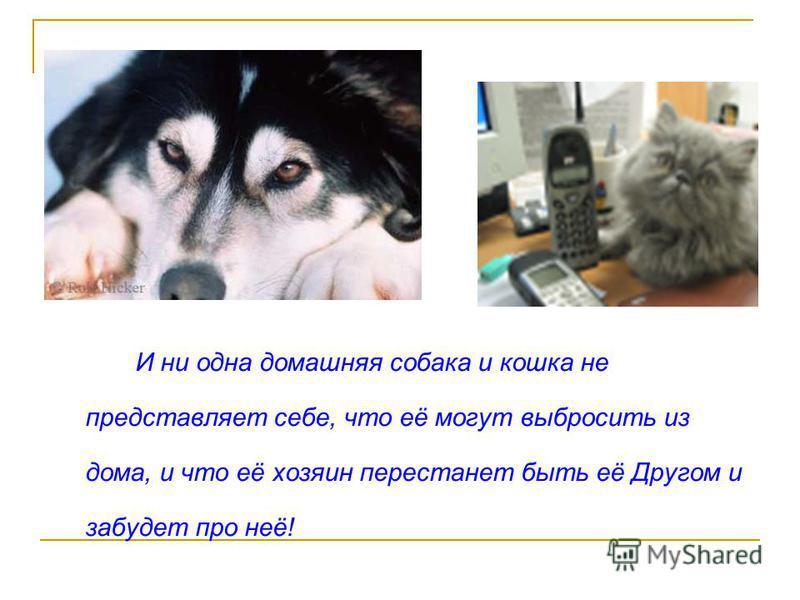 И ни одна домашняя собака и кошка не представляет себе, что её могут выбросить из дома, и что её хозяин перестанет быть её Другом и забудет про неё!