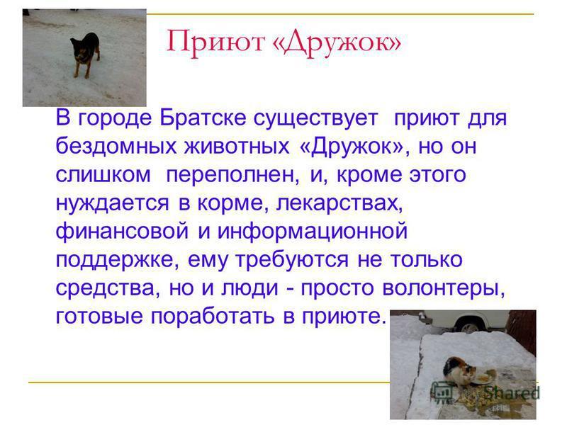 Приют «Дружок» В городе Братске существует приют для бездомных животных «Дружок», но он слишком переполнен, и, кроме этого нуждается в корме, лекарствах, финансовой и информационной поддержке, ему требуются не только средства, но и люди - просто воло