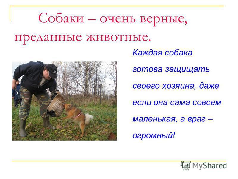 Собаки – очень верные, преданные животные. Каждая собака готова защищать своего хозяина, даже если она сама совсем маленькая, а враг – огромный!