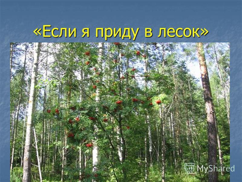 «Если я приду в лесок»