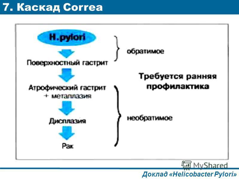 7. Каскад Correa Доклад «Helicobacter Pylori»