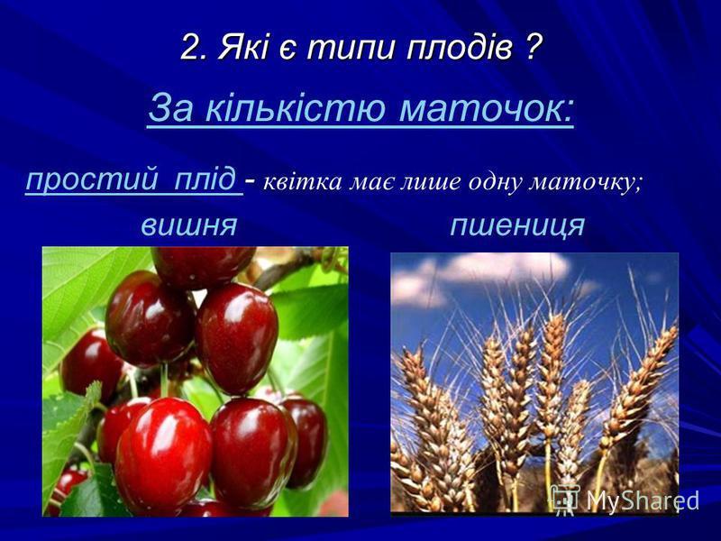 2. Які є типи плодів ? За кількістю маточок: простий плід - квітка має лише одну маточку; вишня пшениця