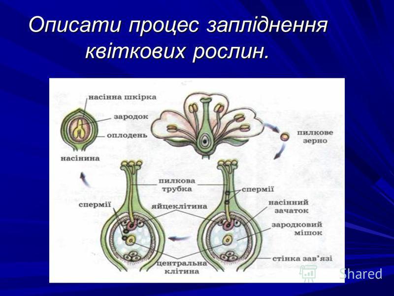 Описати процес запліднення квіткових рослин.