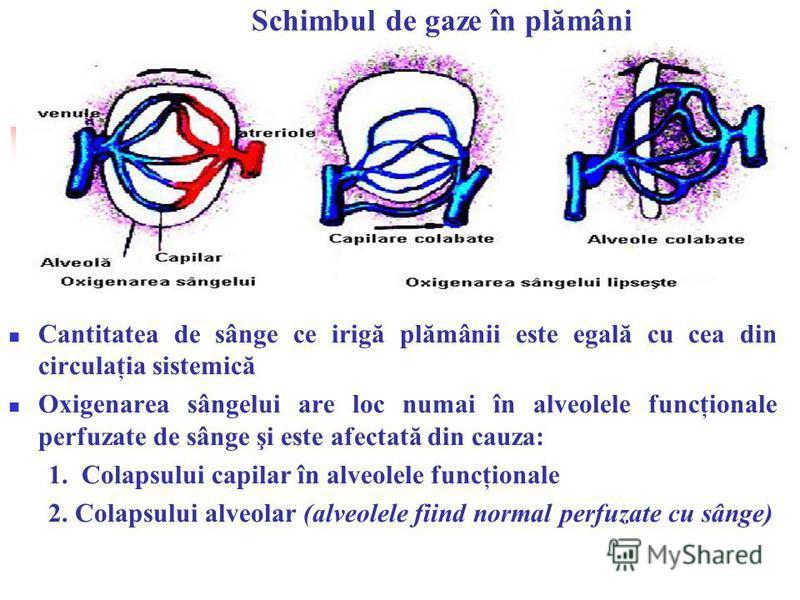 Schimbul de gaze în plămâni Cantitatea de sânge ce irigă plămânii este egală cu cea din circulaţia sistemică Oxigenarea sângelui are loc numai în alveolele funcţionale perfuzate de sânge şi este afectată din cauza: 1. Colapsului capilar în alveolele