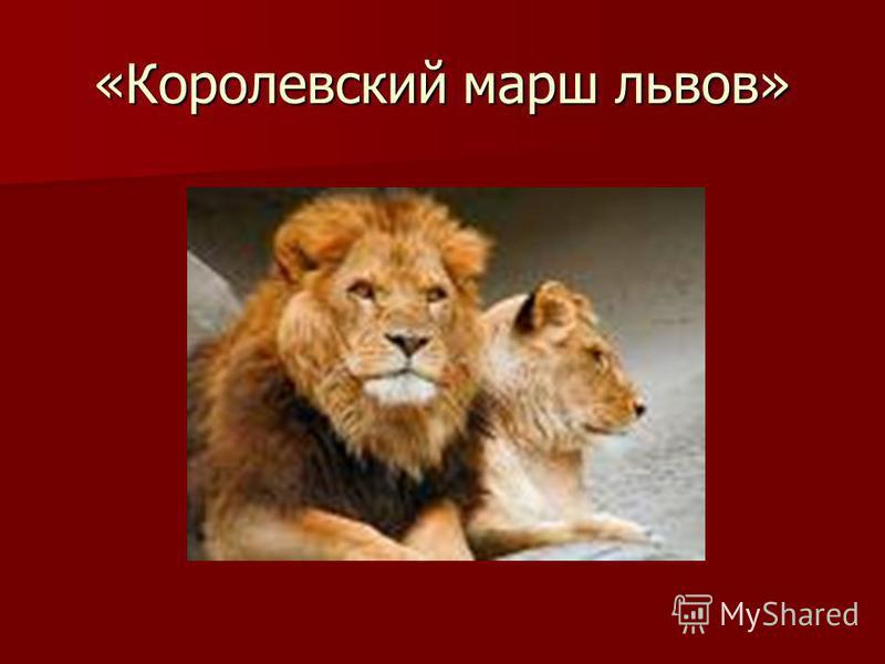 «Королевский марш львов»