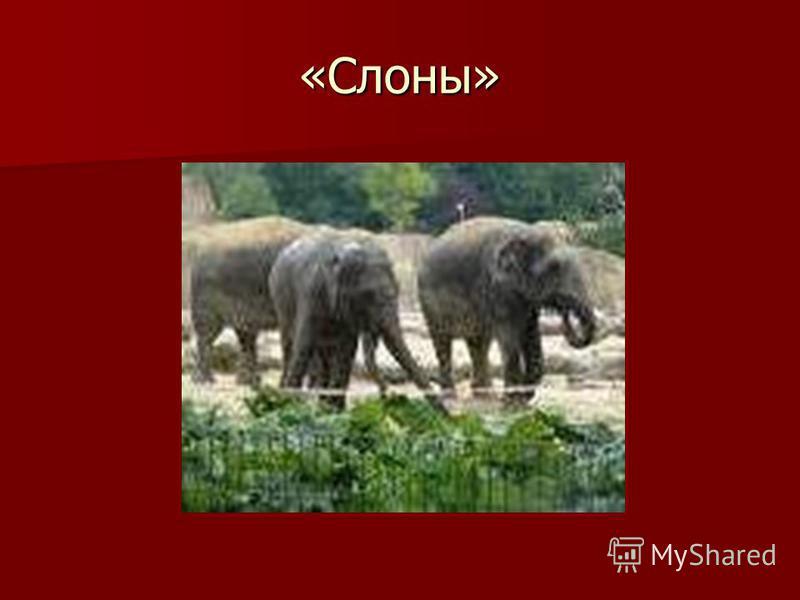 «Слоны»