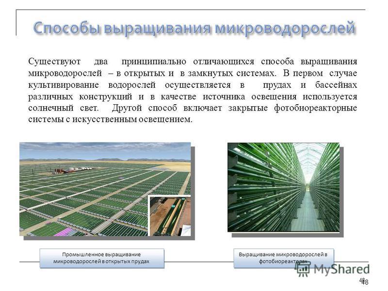 48 Выращивание микроводорослей в фотобиореакторах Промышленное выращивание микроводорослей в открытых прудах Существуют два принципиально отличающихся способа выращивания микроводорослей – в открытых и в замкнутых системах. В первом случае культивиро