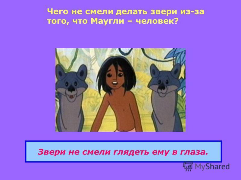 Чего не смели делать звери из-за того, что Маугли – человек? Звери не смели глядеть ему в глаза.