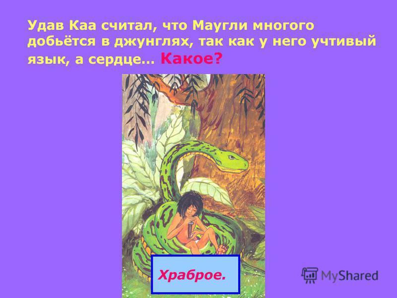 Удав Каа считал, что Маугли многого добьётся в джунглях, так как у него учтивый язык, а сердце… Какое? Храброе.
