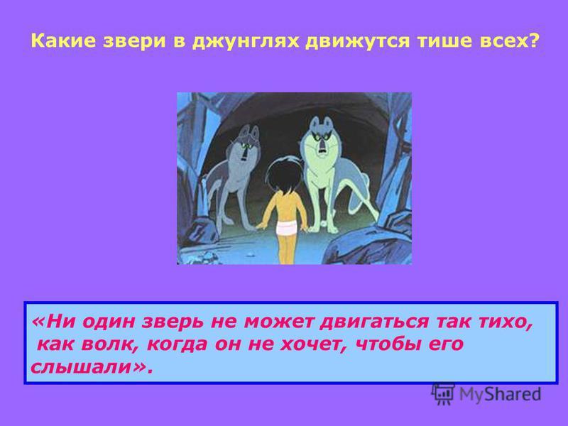 Какие звери в джунглях движутся тише всех? «Ни один зверь не может двигаться так тихо, как волк, когда он не хочет, чтобы его слышали».