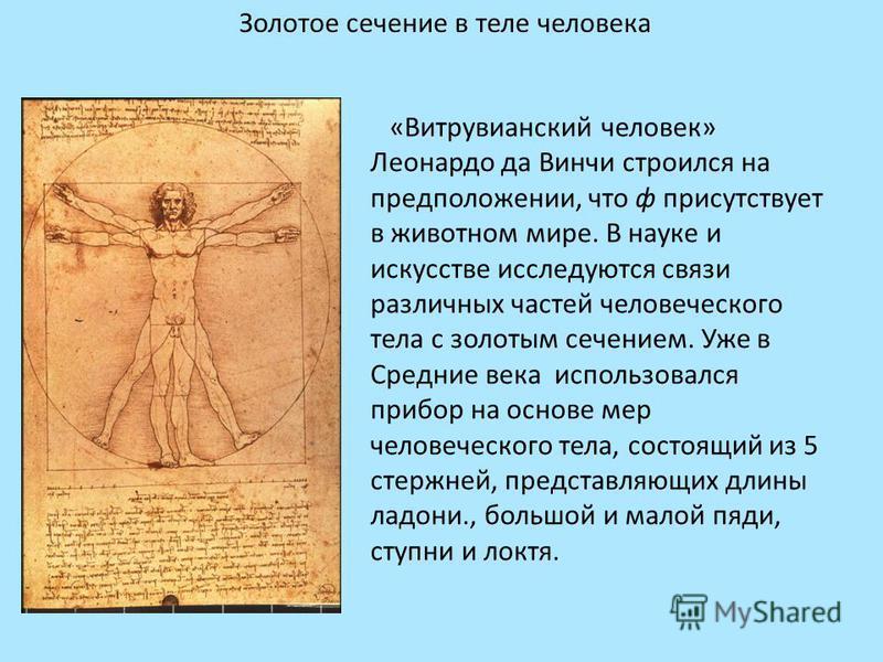 Золотое сечение в теле человека «Витрувианский человек» Леонардо да Винчи строился на предположении, что ф присутствует в животном мире. В науке и искусстве исследуются связи различных частей человеческого тела с золотым сечением. Уже в Средние века