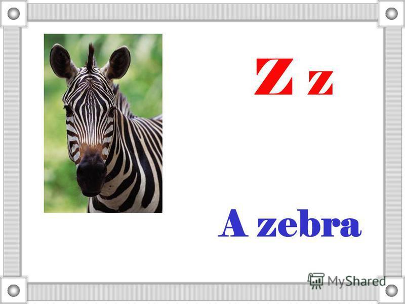 A zebra Z z