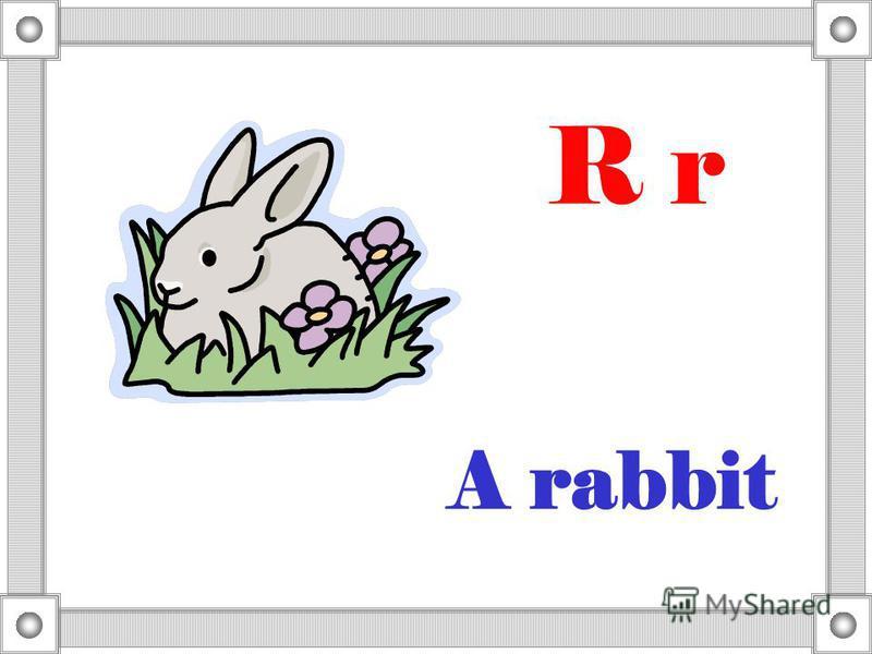 A rabbit R r