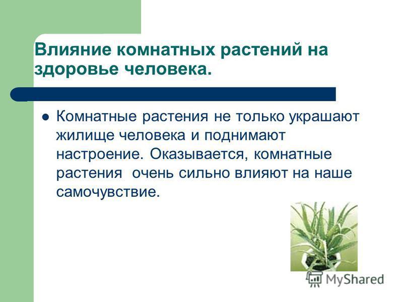 Влияние комнатных растений на здоровье человека. Комнатные растения не только украшают жилище человека и поднимают настроение. Оказывается, комнатные растения очень сильно влияют на наше самочувствие.