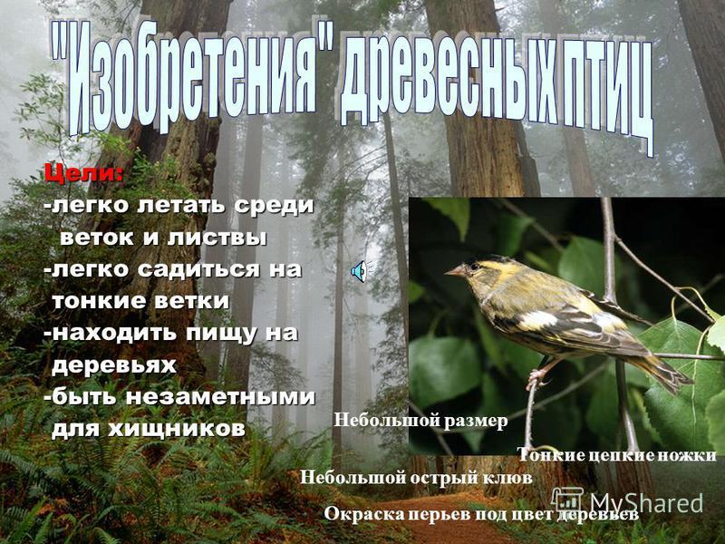 Группы птиц по месту обитания наземные древесные водоплавающие