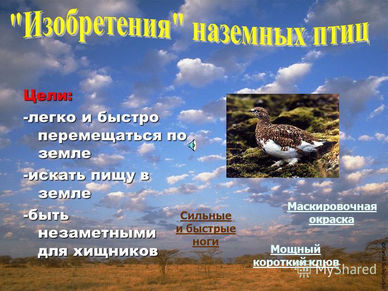 Цели: -издалека видеть добычу -быстро летать, чтобы ее догнать -разорвать добычу Острое зрение Большие сильные крылья Большие размеры Мощные когтистые ноги Мощный острый клюв