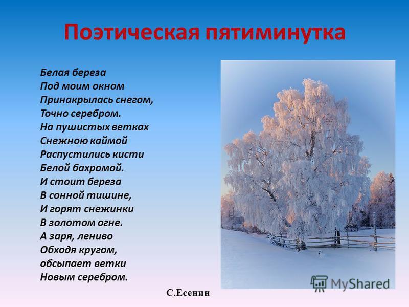 Поэтическая пятиминутка Белая береза Под моим окном Принакрылась снегом, Точно серебром. На пушистых ветках Снежною каймой Распустились кисти Белой бахромой. И стоит береза В сонной тишине, И горят снежинки В золотом огне. А заря, лениво Обходя круго