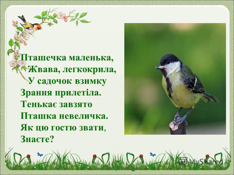 Пташечка маленька, Жвава, легкокрила, У садочок взимку Зрання прилетіла. Тенькає завзято Пташка невеличка. Як цю гостю звати, Знаєте?