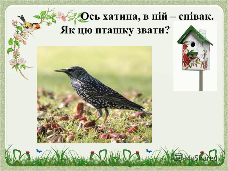 Ось хатина, в ній – співак. Як цю пташку звати?