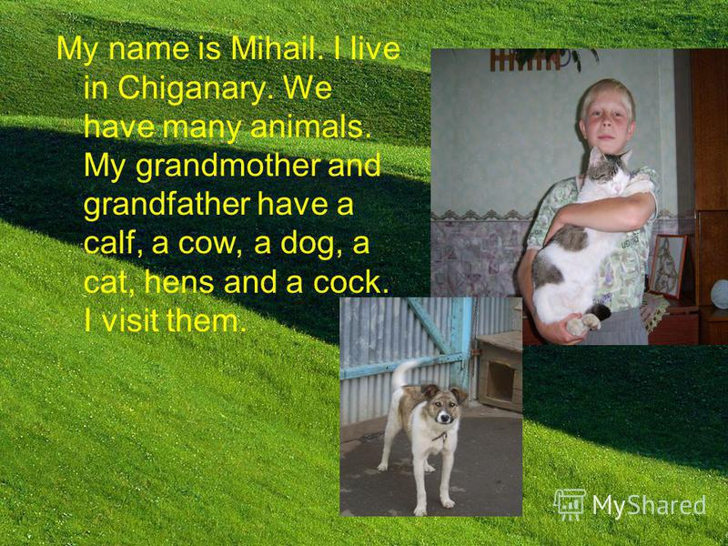 My name is Mihail. I live in Chiganary. We have many animals. My grandmother and grandfather have a calf, a cow, a dog, a cat, hens and a cock. I visit them.