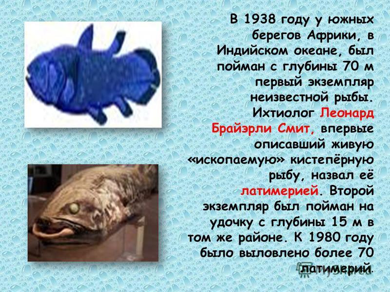 В 1938 году у южных берегов Африки, в Индийском океане, был пойман с глубины 70 м первый экземпляр неизвестной рыбы. Ихтиолог Леонард Брайэрли Смит, впервые описавший живую «ископаемую» кистепёрную рыбу, назвал её латимерией. Второй экземпляр был пой
