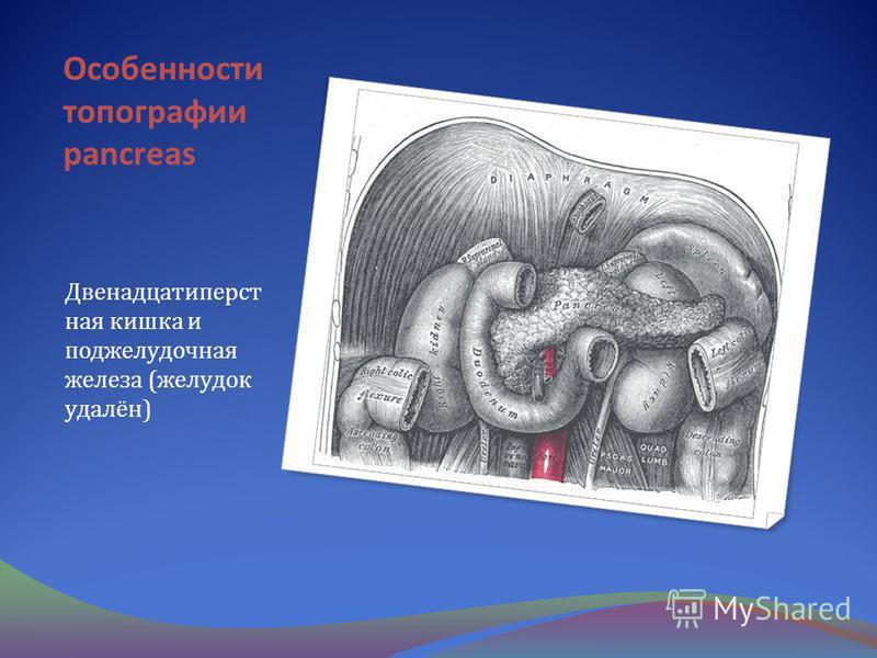 Особенности топографии pancreas Двенадцатиперст ная кишка и поджелудочная железа (желудок удалён)