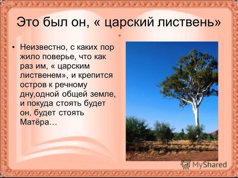 Это был он, « царский листвень» Неизвестно, с каких пор жило поверье, что как раз им, « царским лиственном», и крепится остров к речному дну,одной общей земле, и покуда стоять будет он, будет стоять Матёра…