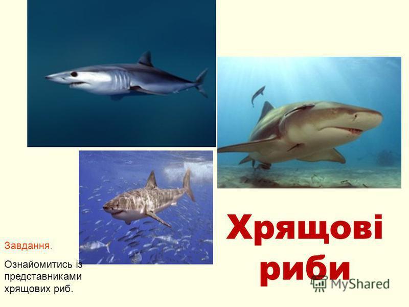 Хрящові риби Завдання. Ознайомитись із представниками хрящових риб.