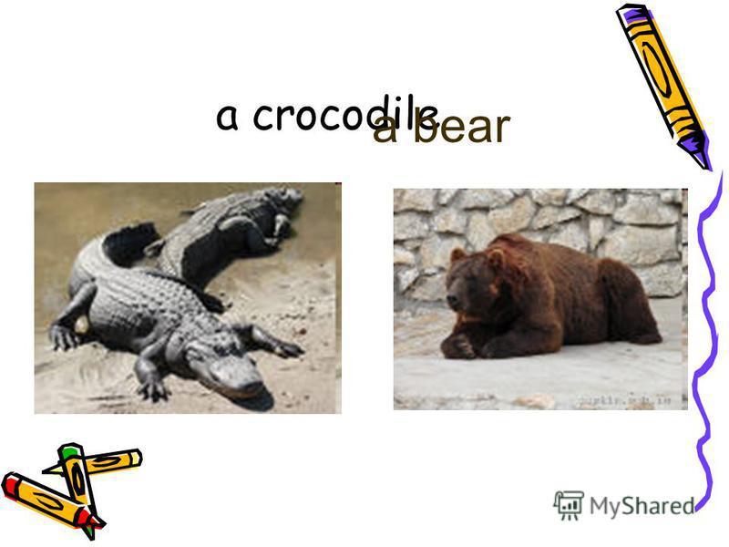 a crocodile a bear