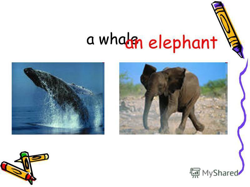 a whale an elephant